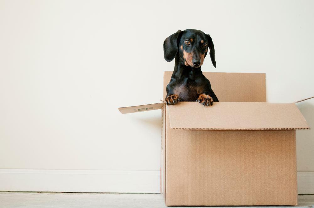Hjelp til flytting